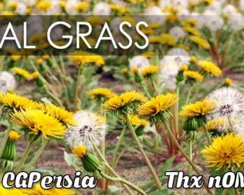 C4D预设 真实花草植物预设包 VIZPARK Real Grass for Cinema4D MUS3