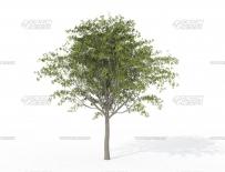 AE插件-三维旗帜动画制作插件 Zaxwerks 3D Flag v4.0.0 CE Win免费下载