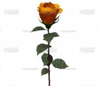 Superluminal Stardust 0.9.5 AE超强的节点式3D星尘粒子特效插件+使用教程 **版